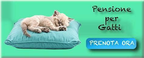 Prenota alla pensione da gatti
